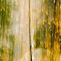 Golden Falls  by Bill Gallagher