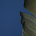 Golden Finch Feather by Karol Livote