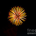 Golden Fireworks Flower by Robert Bales