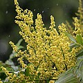 Golden Flora 2013 by Maria Urso