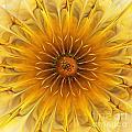 Golden Flower by Klara Acel