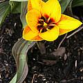 Golden Flower by Richard Headley