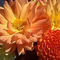 Golden Flowers Upclose  by Duane McCullough