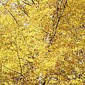 Golden Foliage by Patrick Kessler