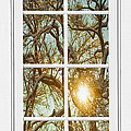Golden Forest  Branches White 8 Windowpane View by James BO Insogna
