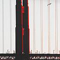 Golden Gate Bridge - Sunset With Bird by Ben and Raisa Gertsberg