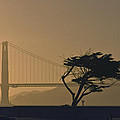 Golden Gate Lovers by Gene Norris