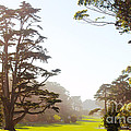Golden Gate Park San Francisco by Artist and Photographer Laura Wrede