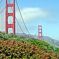 Golden Gate by Suzanne Gaff