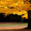 Golden Glow Of Autumn Fall Colors by Jeff Folger