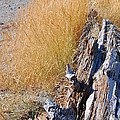 Golden Grass by Connie Fox