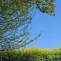 Golden Growing Season by Ann Horn