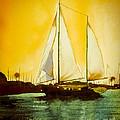 Golden Harbor  by Kip DeVore