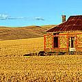 Golden Harvest by Bill  Robinson