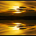 Golden by Kevin Bone