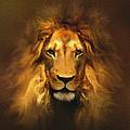 Golden King Lion by Robert Foster