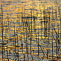 Golden Lake Ripples by James BO  Insogna