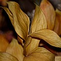 Golden Leafed Abstract 2013 by Maria Urso