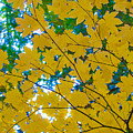 Golden Leaves Of Autumn by Tikvah's Hope