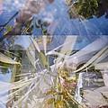 Golden Mean Holga Garden 1 by Carolina Liechtenstein