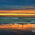 Golden Pacific by Robert Bales