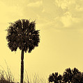 Golden Palm Silhouette by Kathy Clark