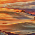 Golden Palouse by Lydia Jacobs