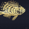 Golden Parrot Fish On Charcoal Black by Serge Averbukh