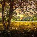 Golden Pastures by Debra and Dave Vanderlaan