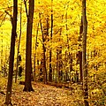 Golden Path by Valerie Fuqua