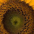 Golden Petals by Ed Gleichman
