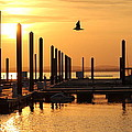 Golden Pier At Sunset by Patricia Abbate