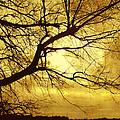 Golden Pond by Ann Powell
