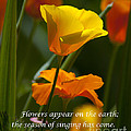 Golden Poppy Floral  Bible Verse Photography by Jerry Cowart