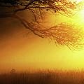 Golden Rays by Douglas Stucky