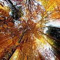Golden Rays by Ivan Vukelic
