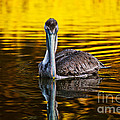 Golden Reflections by Joan McCool