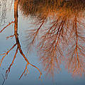 Golden Reflections by Kathleen Bishop