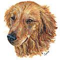 Golden Retriever by Barb Capeletti