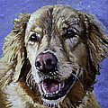 Golden Retriever - Molly by Portraits By NC