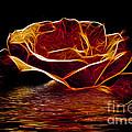 Golden Rose by Ben Yassa