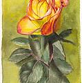 Golden Rose by Dai Wynn