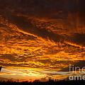 Golden Saguaro by Nicholas  Pappagallo Jr