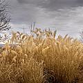 Golden Shades Of Winter by Ernie Echols