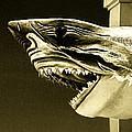 Golden Shark In Ocean City by Bill Swartwout Fine Art Photography
