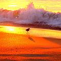 Golden Beach by Rand Wall