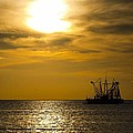 Golden Shrimpers by Michael Thomas