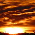 Golden Sky by Melanie Leo