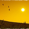 Golden Sky... by Tim Fillingim