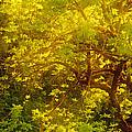 Golden Spring by Bobbie Climer